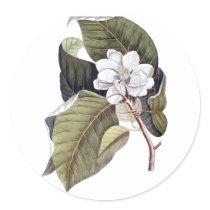 Elegant Southern White Magnolia Flower Classic Round Sticker