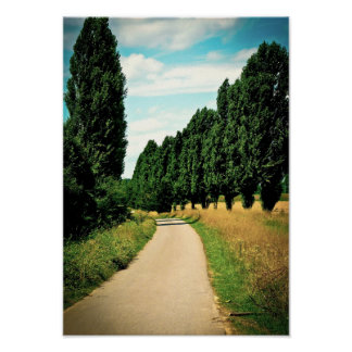 Elegant Trees View Natural Travel Holiday Poster