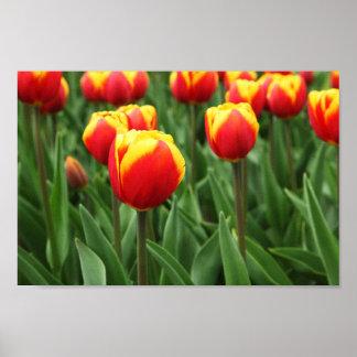 Elegant Tulip Floral Poster