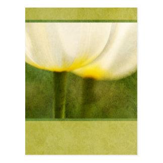 Elegant Tulips Postcard