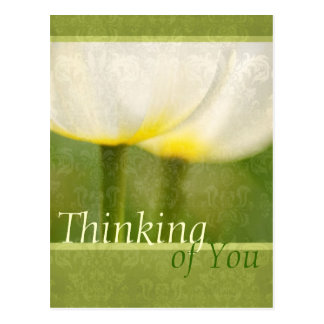 Elegant Tulips Thinking of You Postcard