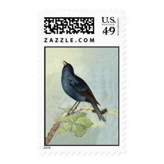 Elegant Vintage Black Bird Blue Watercolor Postage Stamp