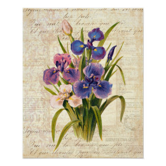 Elegant Vintage French Pink and Purple Irises Poster