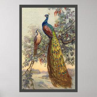 Elegant vintage peacock tree poster