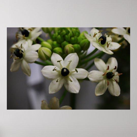 Elegant White Blossoms Poster