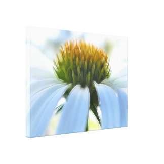 Elegant White Coneflower Gallery Wrapped Canvas
