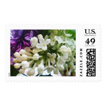 Elegant white lilac blossom photo postage