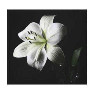 Elegant White Lily Wrapped Canvas Print