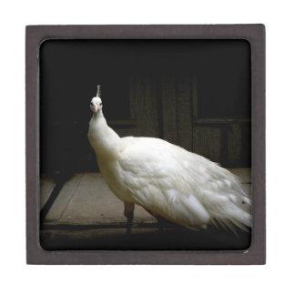 Elegant white peacock vintage nature bird photo gift box