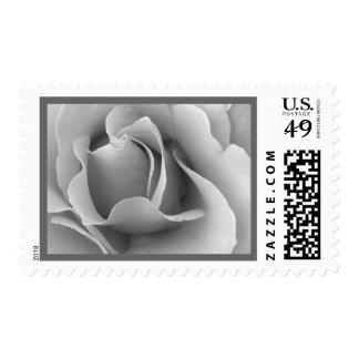 Elegant WHITE & SILVER Wedding Rose Stamp