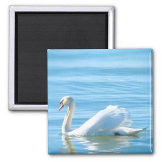 Elegant White Swan in the Lake Constance - Magnet