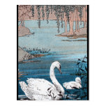 Elegant White Swan With Baby Post Card