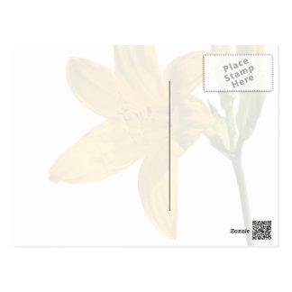 Elegant Yellow lilly Postcard