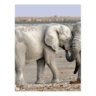 elephant-11701-el postcard