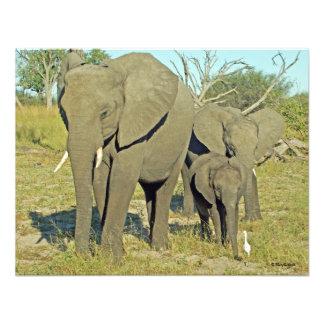 ELEPHANT 22 PHOTO PRINT
