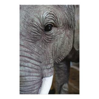 elephant-543256 Grey elephant photography close-up Photo Print