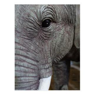 elephant-543256 Grey elephant photography close-up Postcard