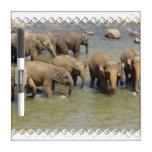 elephant-81.jpg pizarras