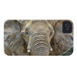 Elephant African All Ears iPhone 4 Case-Mate Case