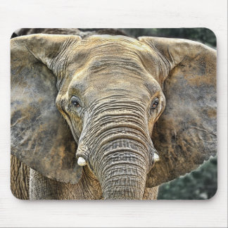 Elephant African All Ears Mouse Pad