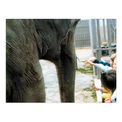 Elephant Afternoon Postcard