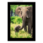 Elephant and Baby Greeting Card