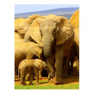 elephant and calf postcard