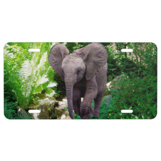 Elephant and Jungle License Plate