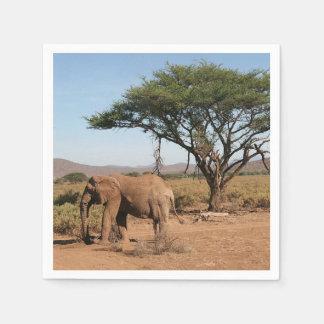 Elephant at Samburu National Reserve Napkin