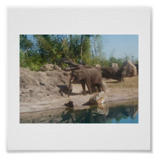 Elephant at Watering Hole Poster