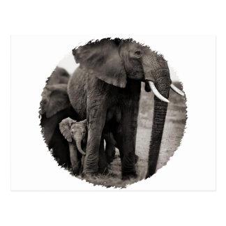 Elephant & Baby Elephant Postcard