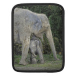 Elephant Baby Love Sleeves For iPads