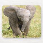 Elephant Baby Mousepads