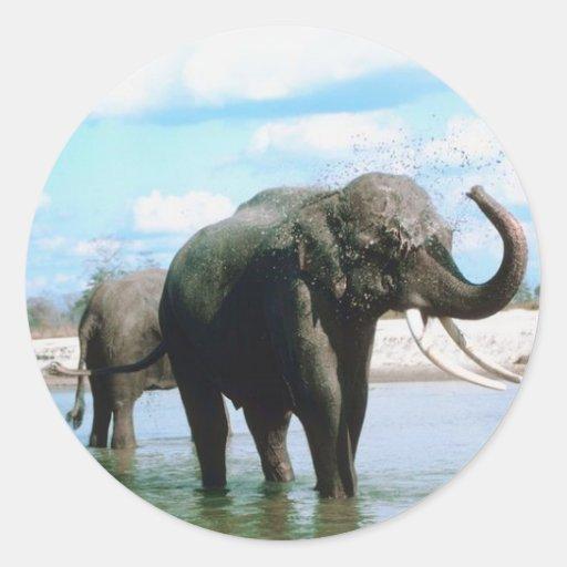 Elephant Bathing Classic Round Sticker