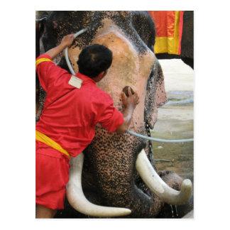 Elephant Bathtime ... Ayutthaya, Thailand Postcard