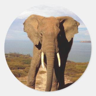 Elephant_Beach_Day_Out,_Round_Sticker. Classic Round Sticker