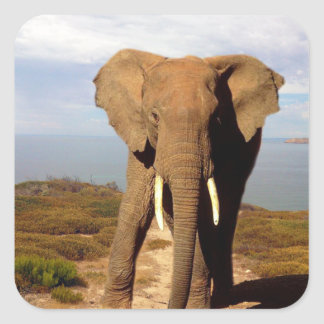Elephant_Beach_Day_Out,_Square_Sticker. Square Sticker