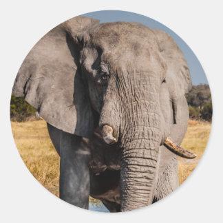 Elephant Bull Classic Round Sticker