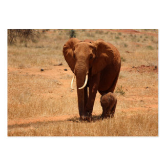 Elephant Large Business Cards (Pack Of 100)