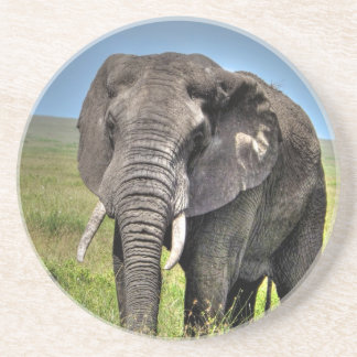 Elephant by Barb Craven_HDR Print.jpg Drink Coaster