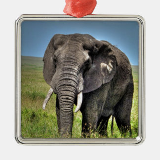 Elephant by Barb Craven_HDR Print.jpg Metal Ornament