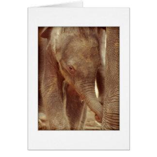Elephant Calf Greeting Card