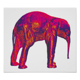 Elephant Calf, Red/Pink, White Back Poster