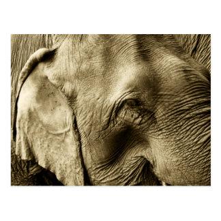 Elephant Card Postcard