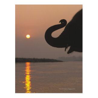 Elephant, Chitwan National Park, Nepal Postcard