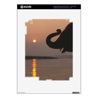 Elephant, Chitwan National Park, Nepal Decals For iPad 3