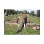Elephant Close-Up Gallery Wrap Canvas