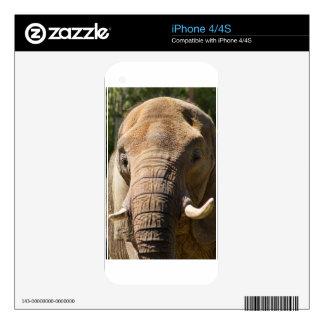 Elephant Closeup 2 iPhone 4S Decals