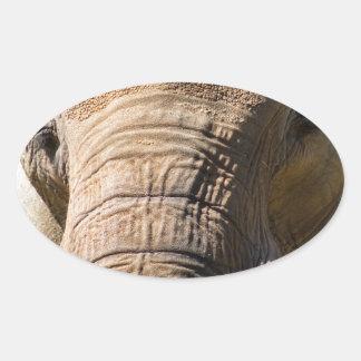 Elephant Closeup 2 Oval Sticker
