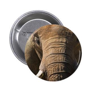 Elephant Closeup Button